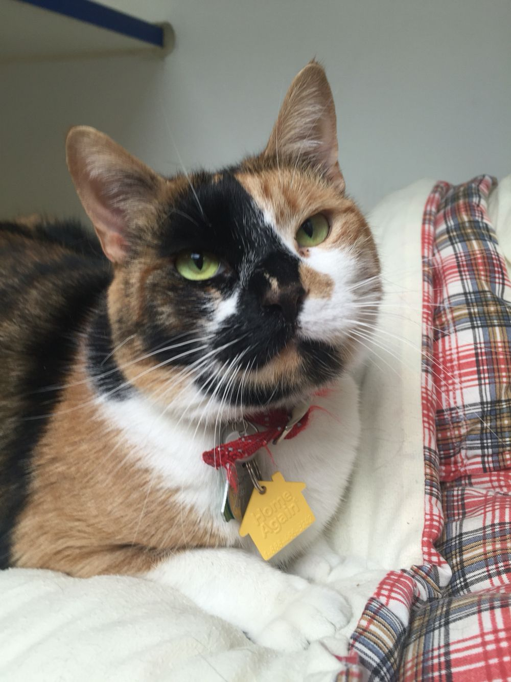 Olga has been waiting such a long time for hr forever home