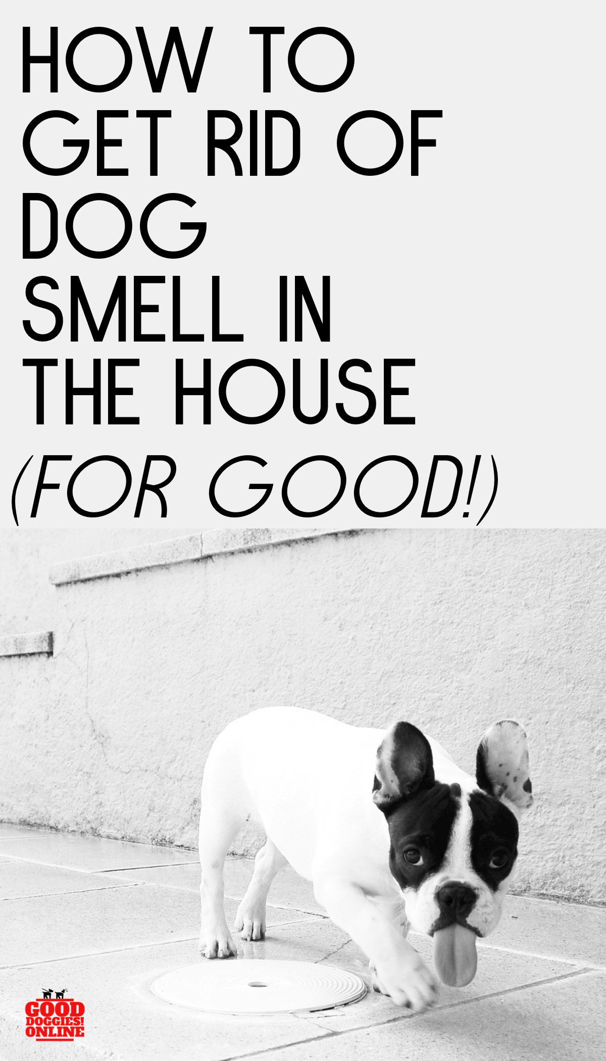 How to Get Rid of Dog Smell in the House Good Doggies