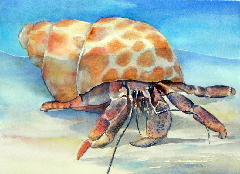 Http Suelynncotton Com Hermit 20crab 20in 20spotted 20shell 20web Jpg Crab Painting Crab Watercolor Crab Art