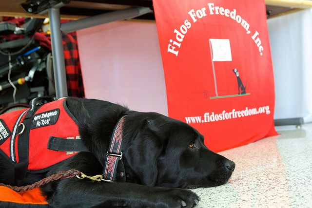 Cfc Fidos For Freedom Therapy Dogs Service Dogs National