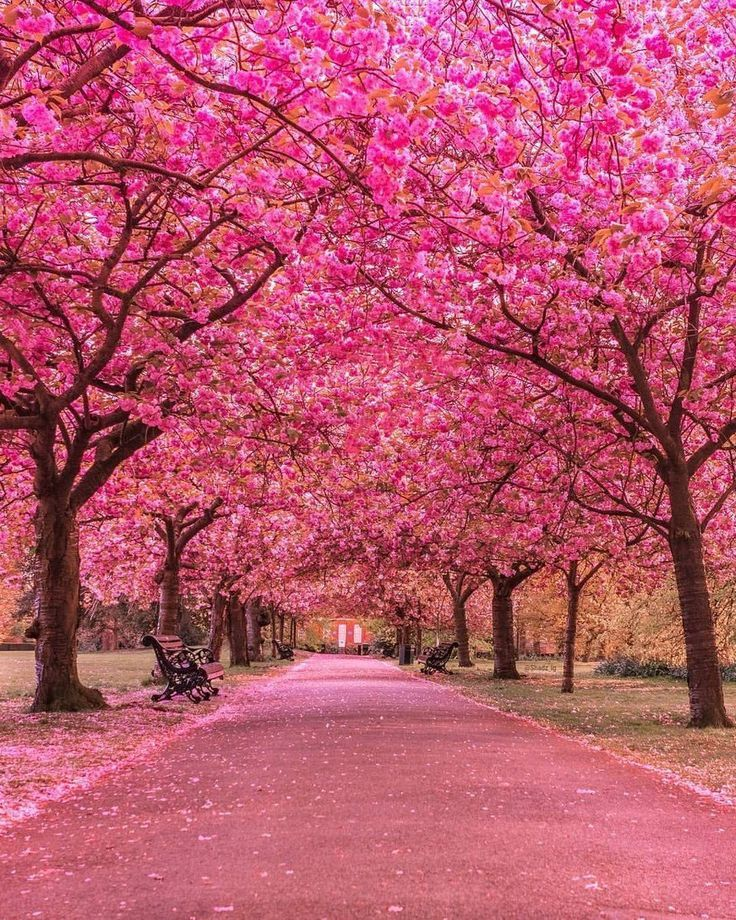 Best Earth Pics On Twitter Beautiful Cherry Blossom At Greenwich Park London Beautiful Nature Beautiful Landscapes Earth Pictures