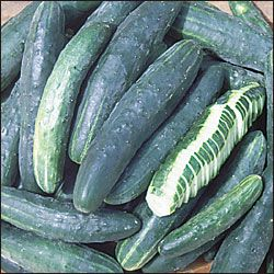 Japanese Climbing Cucumber Organic Seeds Garden Animals 640 x 480