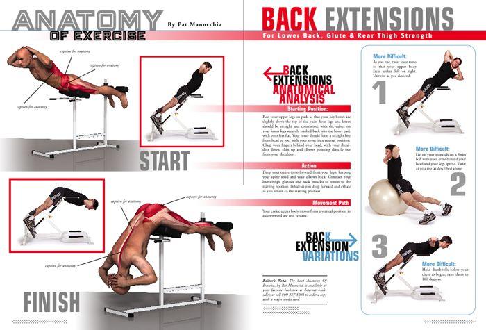 anatomy of exercise | Anatomy of Exercise - Magazine design ...