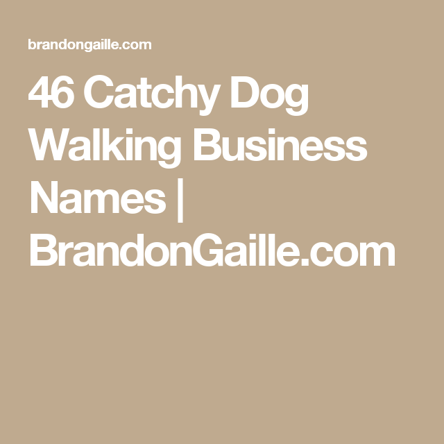 46 catchy dog walking business names brandongaillecom
