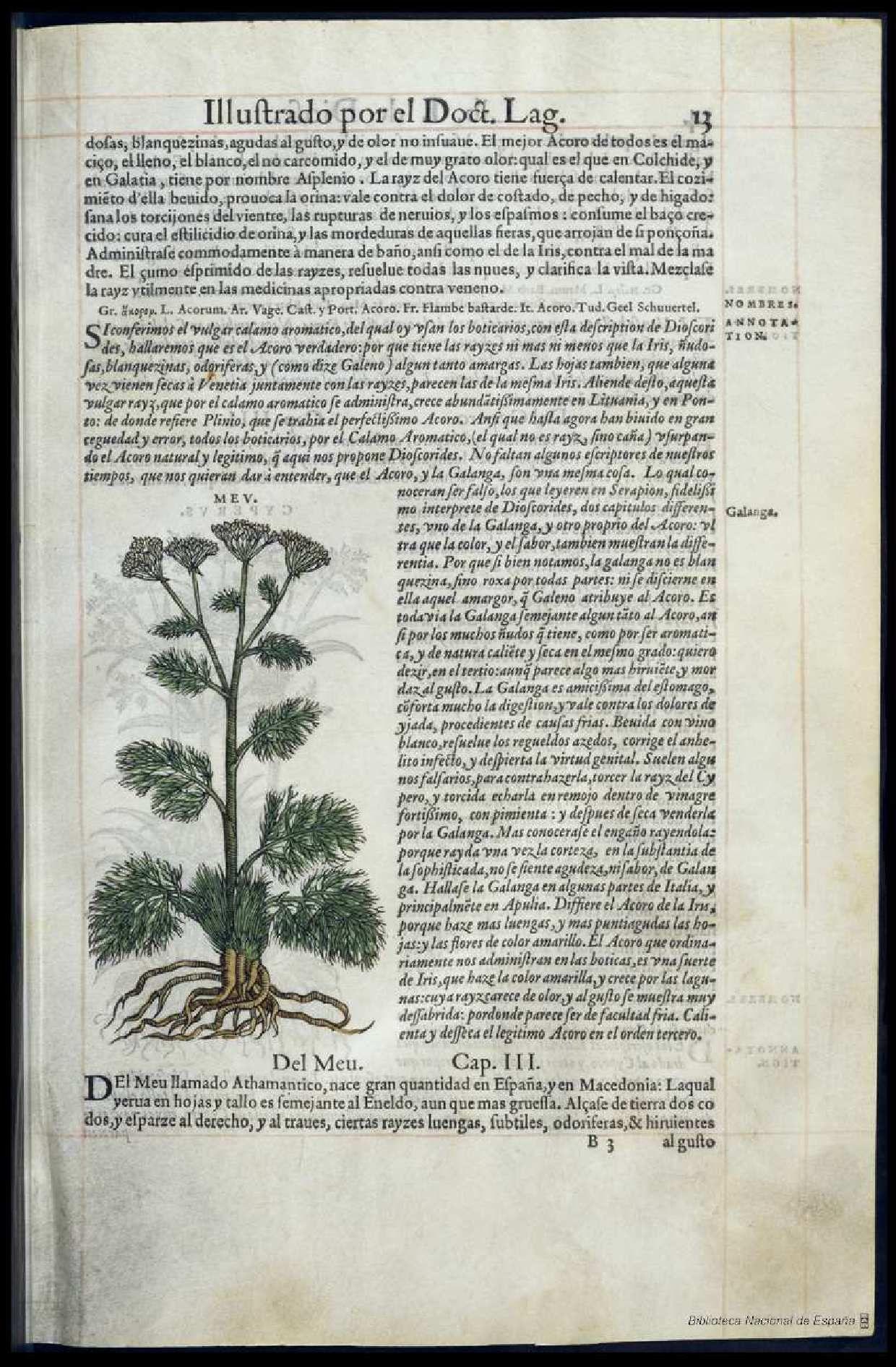 Pedacio Dioscorides Anazarbeo, Acerca De La Materia
