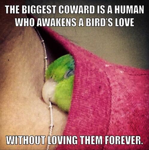 Parrots Deserve No Feather Left Behind Parrot Pet Birds Funny