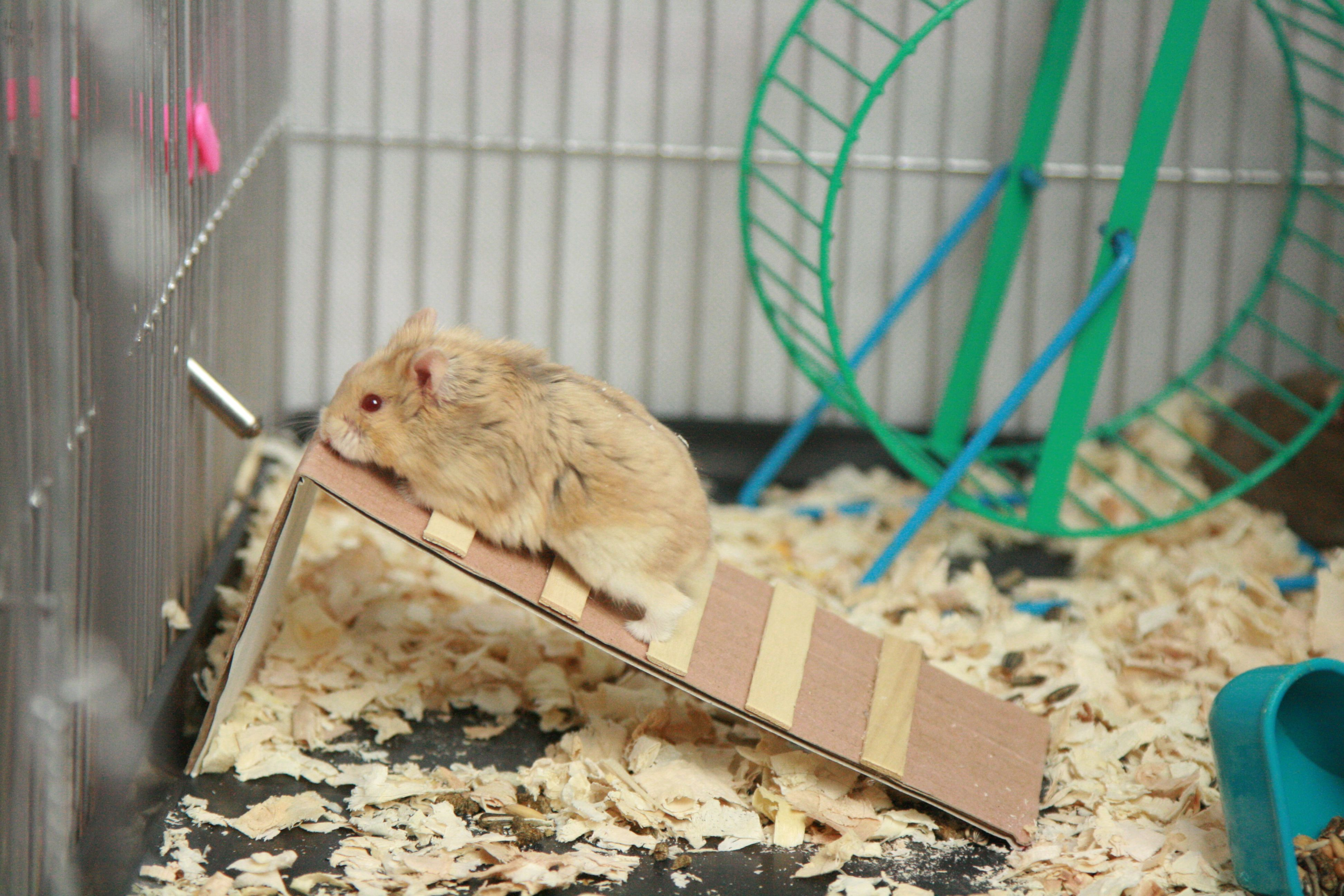 How To Make Toys For Hamsters Hamster Diy Hamster Toys Hamster