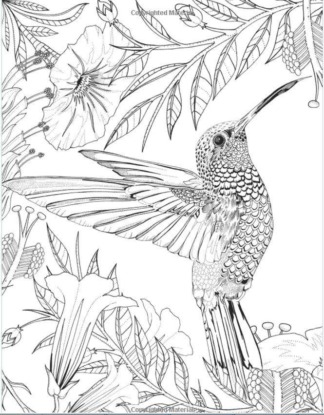 Новости | Раскраски с животными, Книжка раскраска, Рисунок ...