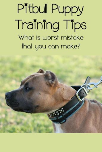 Pitbull Puppy Training Tips The Biggest Mistake Owners Make