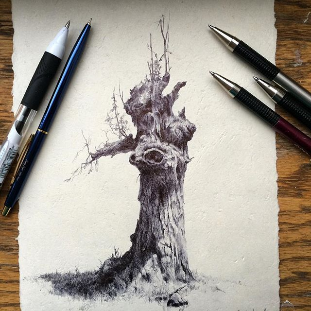 Secretlifeoftrees Day 23 Out Of 126 Ballpoint Pen On Paper Tree Drawing Tree Sketches Sick Drawings