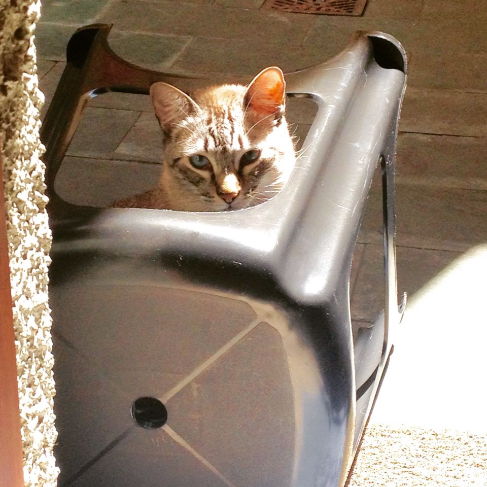 Brincando de esconde-esconde! Hide and seek