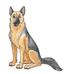 German Shepherd Drawings Cartoon Yahoo Image Search Results