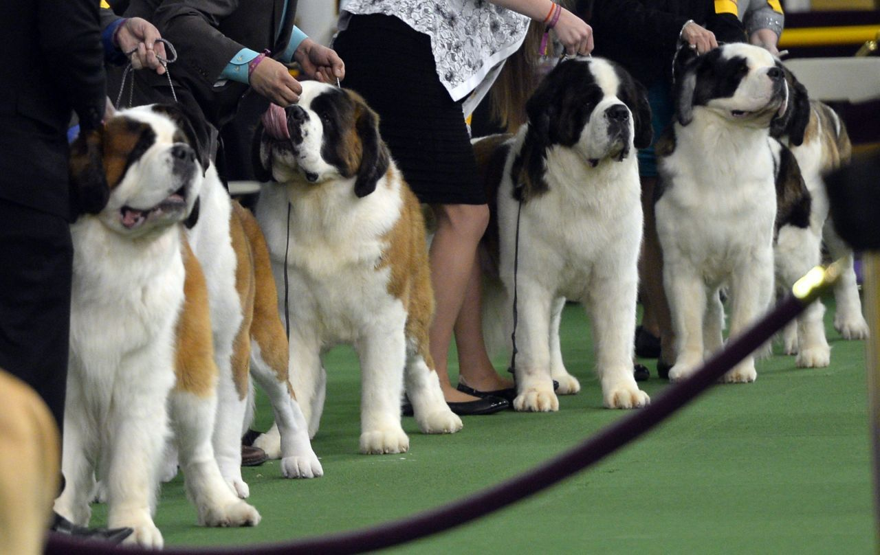 The 14 Best Moments From Last Night S Westminster Dog Show