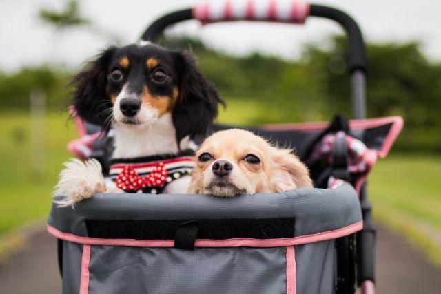 ペットカート人気おすすめランキング10選 ペットカートを使うメリットとは わんにゃんメディア ペット 犬 散歩 犬