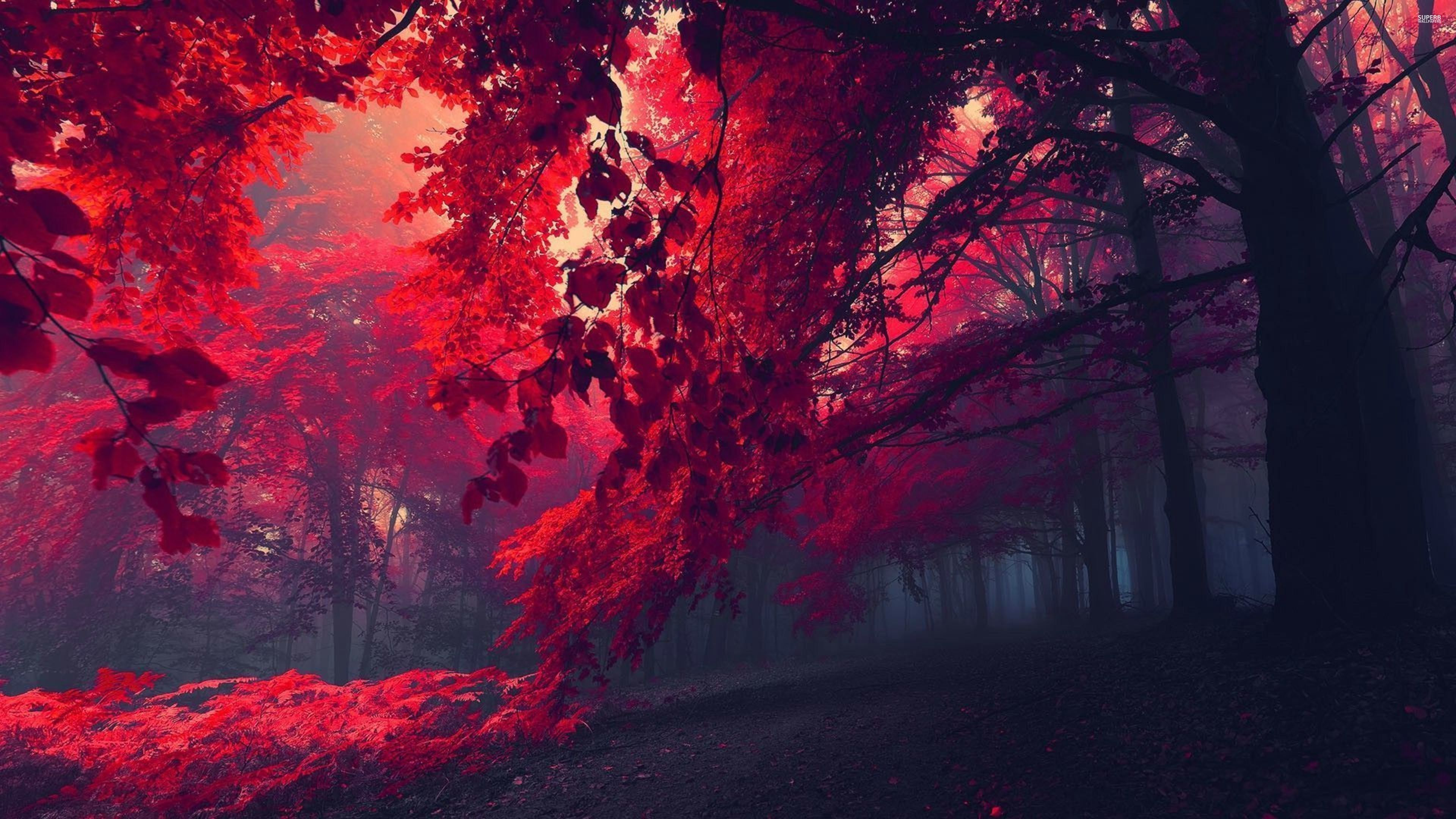 Red Forest 26750 3840x2160 Wallpaper 3840x2160 317502 3840x2160 Wallpaper Uhd Wallpaper Forest Wallpaper