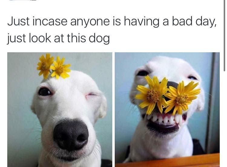 Funny Memes For A Bad Day : As cute as this is please don t go sticking shit up your dogs