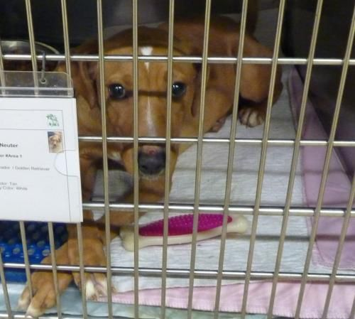Meet 40912 Rubbed His Poor Nose Raw Wanting Out A Petfinder
