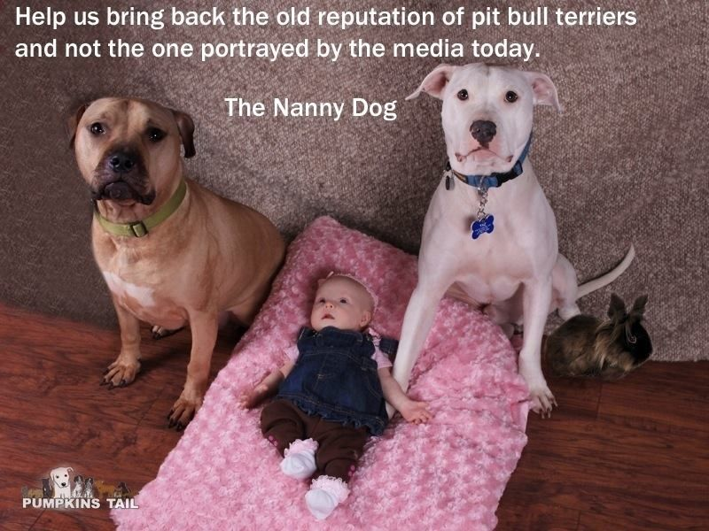 The Nanny Dog.... | pit bulls are great! | Pinterest