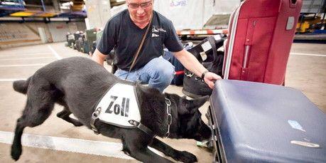 """Hunde sind """"Riech""""-Meister - egal, was es zu Erschnüffeln gibt, der Hund tut es. Wissenschafter bestätigen dies."""
