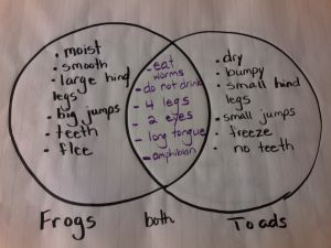 Frog And Toad Venn Diagram 1995 Dodge Ram Wiring Compare Contrast Frogs Toads