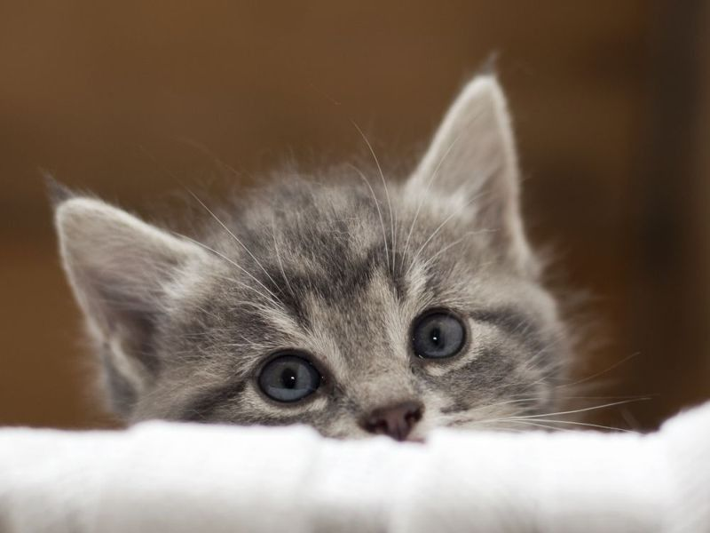 Streichel Mich Flauschig Weiche Katzen Sind Einfach Zum Kuscheln Susseste Haustiere Katzen Katzenliebe
