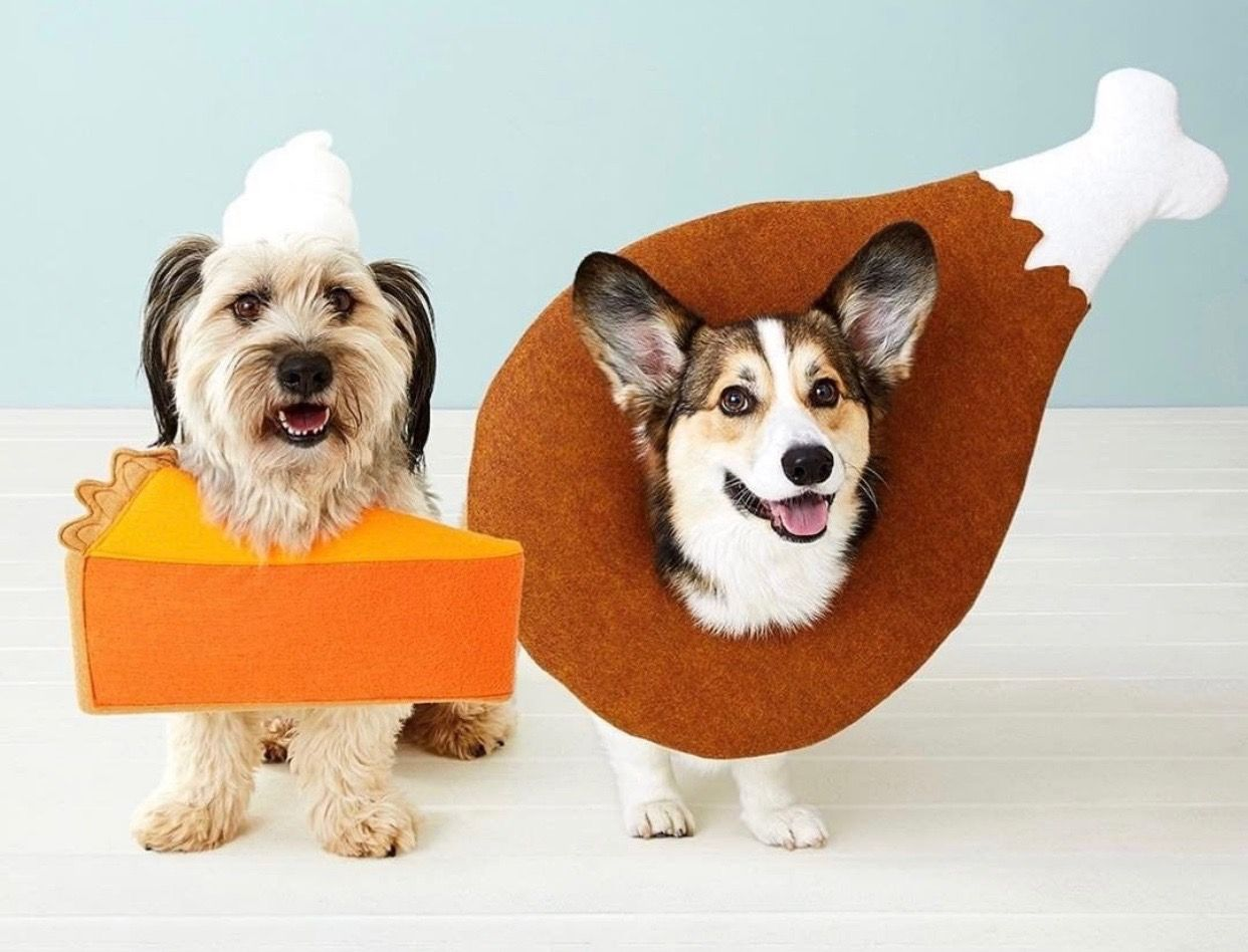 Pet Costumes Dog Costumes Dogs And Puppies