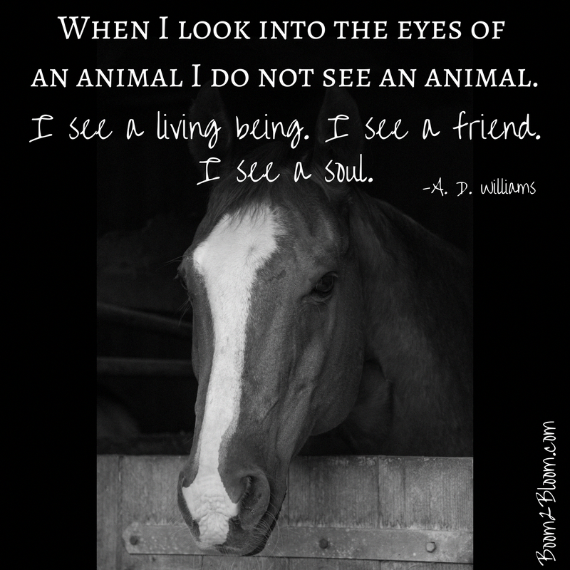 When I look into the eyes of an animal I do not see an