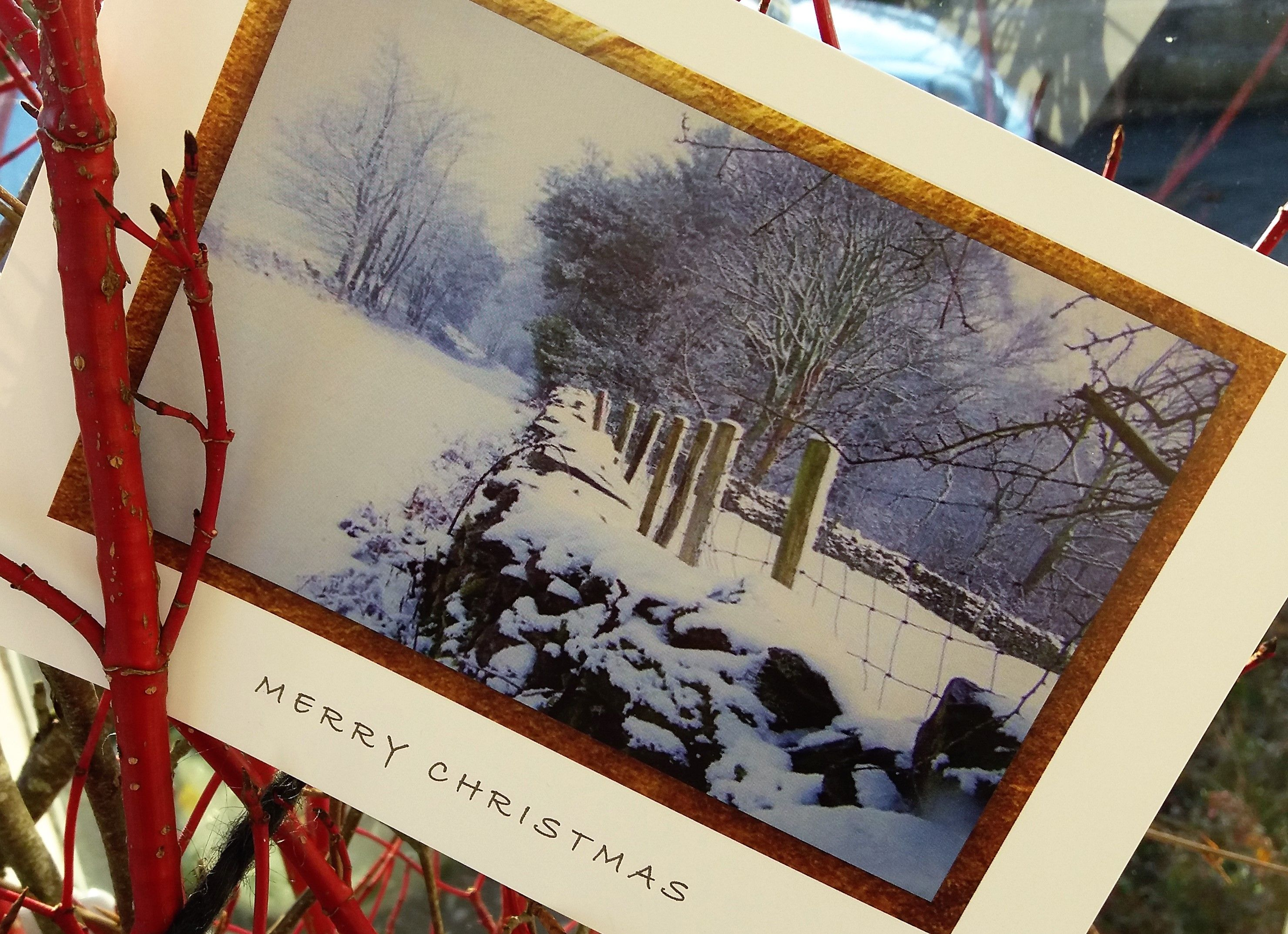 Pin By The Penned Letter On Christmas Card With Images