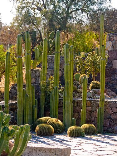 Beautiful Cactus Garden Cacti Gardens and Landscaping