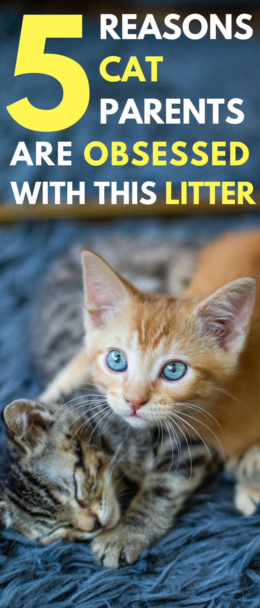 5 Reasons Cat Parents Are Obsessed With This Litter Cat Parenting Cats Baby Animals Pictures