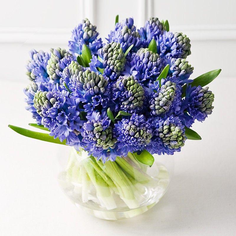 Spring Hyacinths | voorjaar | Pinterest | Flowers, Plants and Gardens