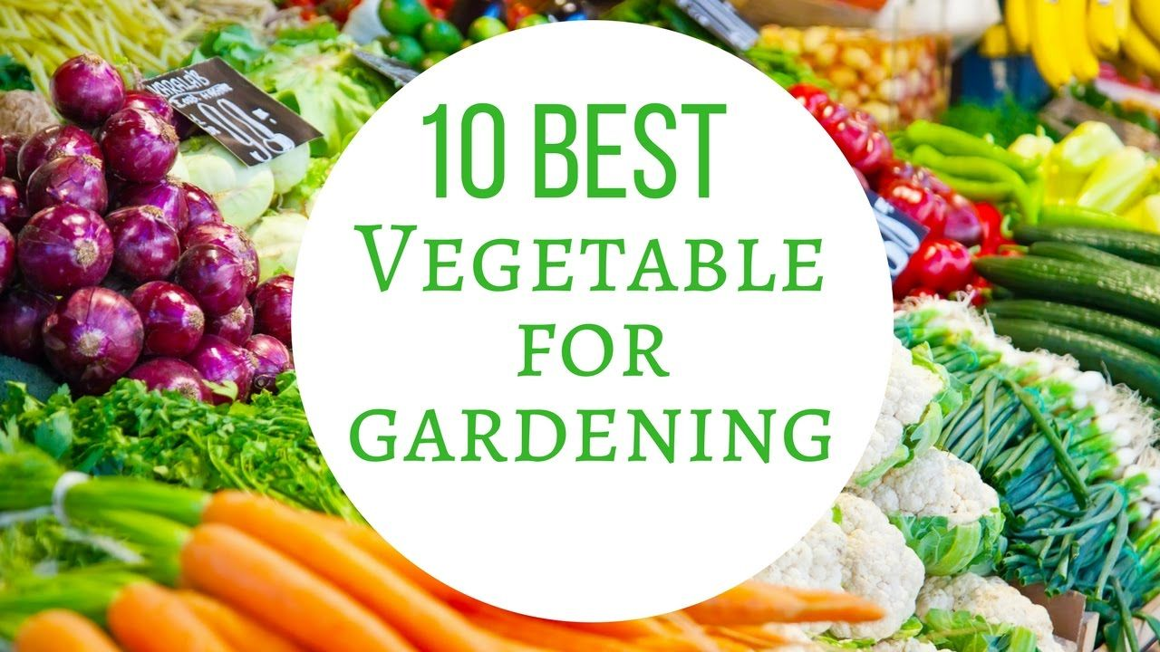 Growing Vegetables In Pots For Beginners - 10 Best Vegetables For Contai...