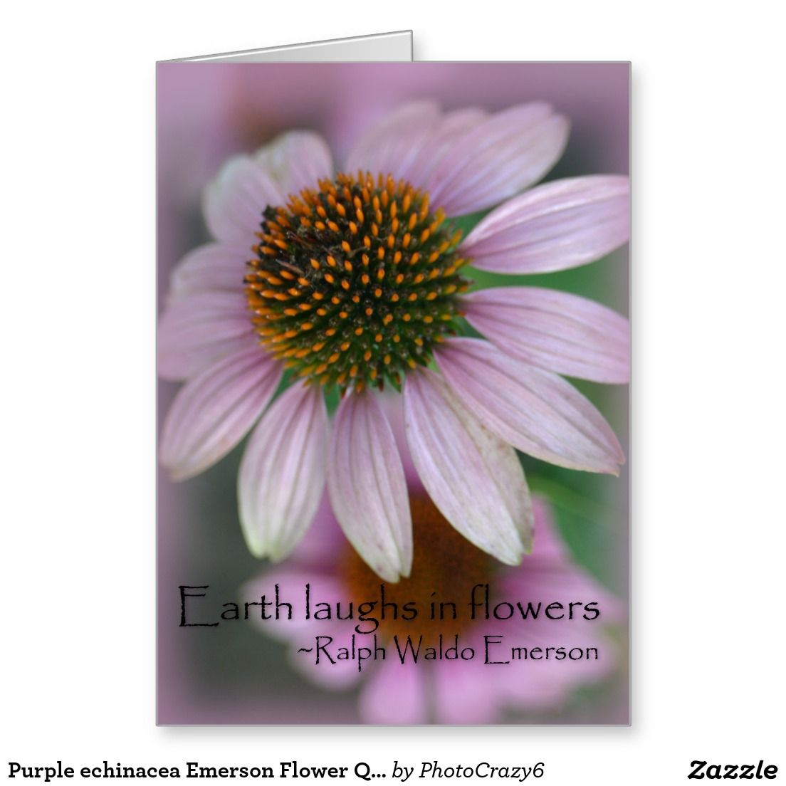 Purple Echinacea Emerson Flower Quote Greeting Card Flower Quotes Purple Cards Echinacea