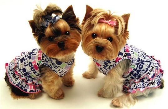 Little Sweet S Pet Boutique Dog Grooming
