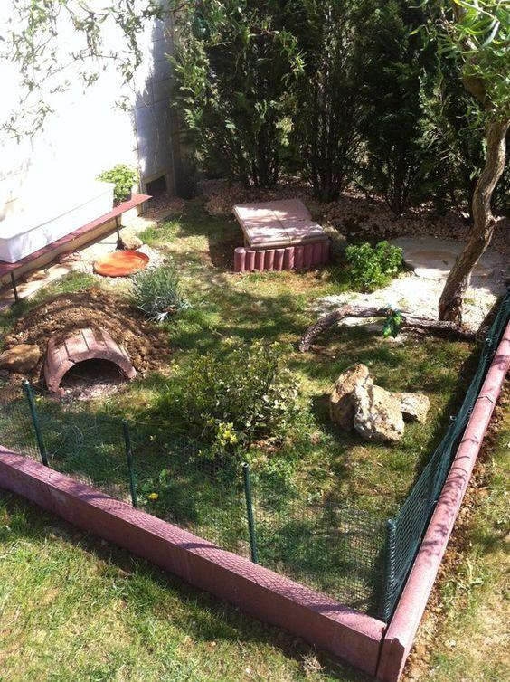si vous avez un jardin pourquoi laisser votre tortue. Black Bedroom Furniture Sets. Home Design Ideas