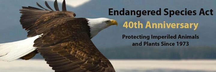 Endangered Species Act is turning 40!