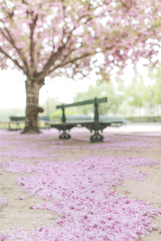 Paris Flowers In 2020 Paris Flowers Cherry Blossom Blossom