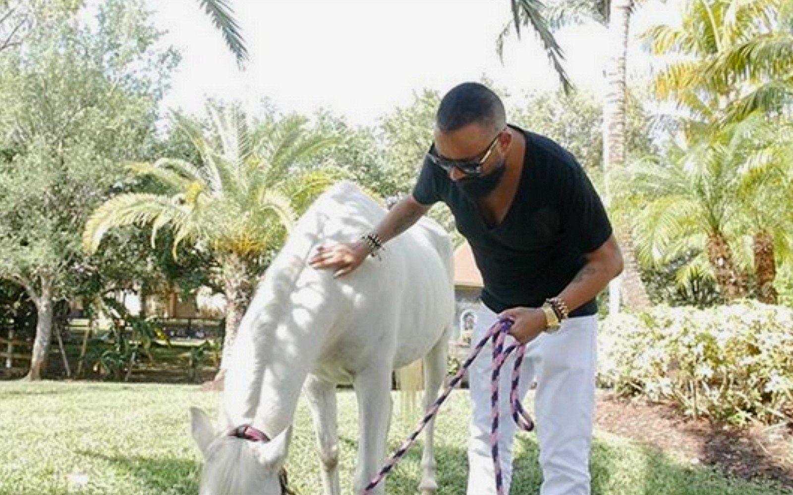 Miami Club Owner Buys Horse Who Was Dragged Onto Dance Floor And Gives Her A New Happy Life Horses Horse Lead Miami Club