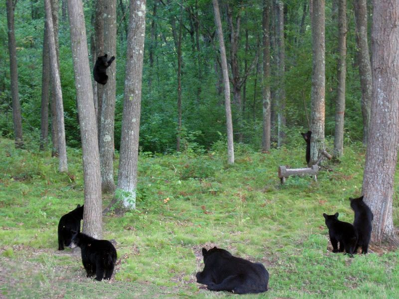 In My Backyard - My true life black bear rescue story ...