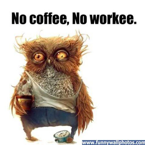 No Coffee Funny Wall Photos Funny Pictures Owl Humor