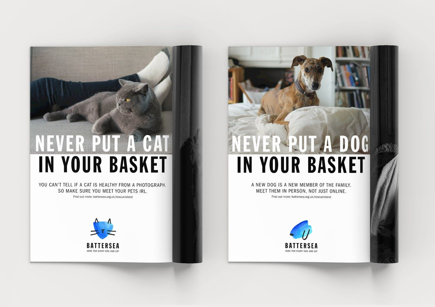 Battersea Brand Strategy Tone Of Voice And Visual Identity For