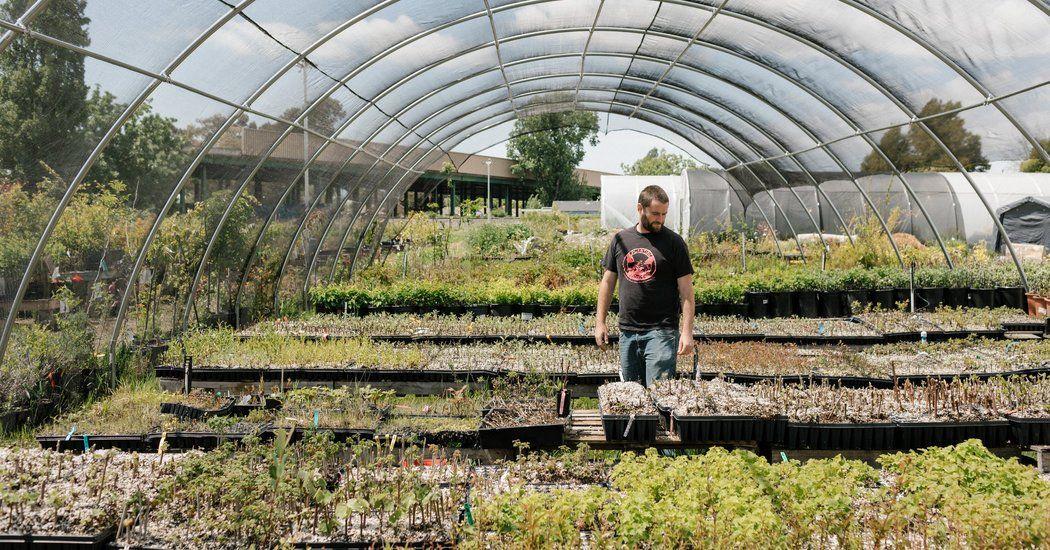 Kale not jail urban farming nonprofit helps excons re