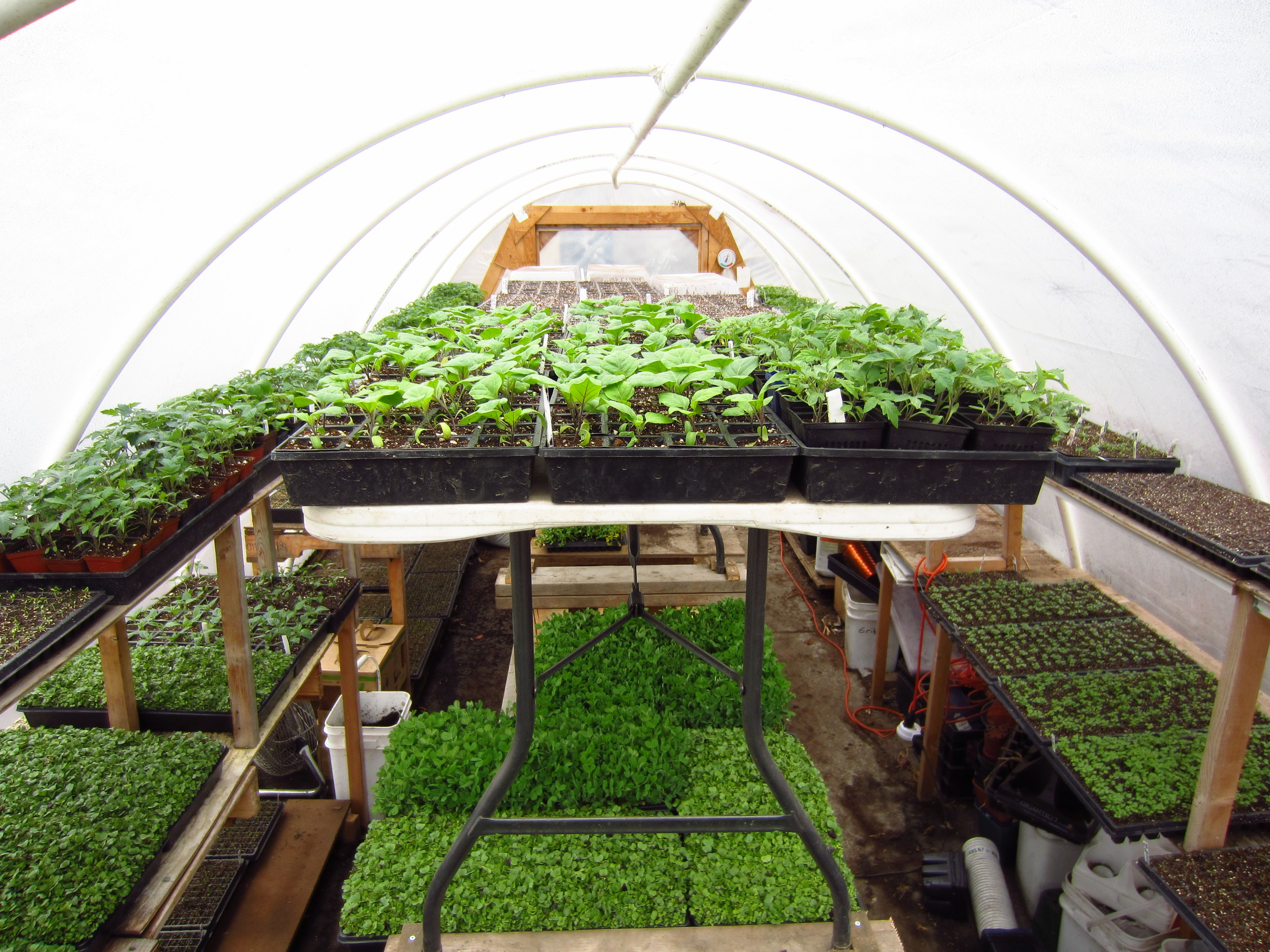 80k Year Farming On 1 3 Acre Square Foot Gardening Meets Commercial Farming Urban Farmer Commercial Farming Square Foot Gardening