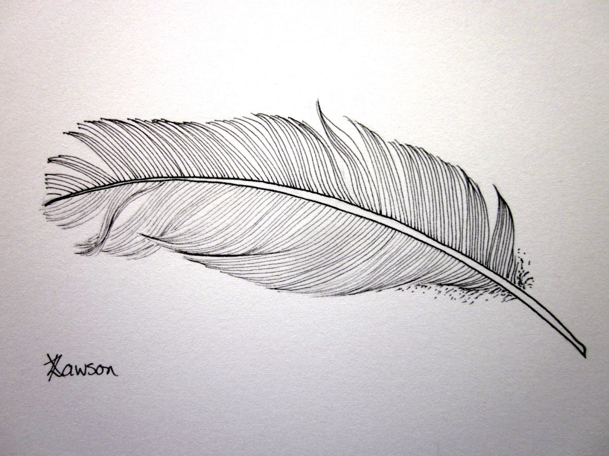 Line Drawing Feather : Feather drawing giveaway feathers ink and