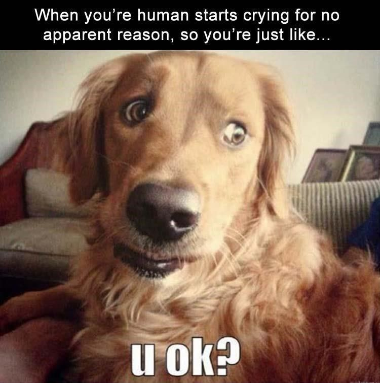 Good Laughs By Good Bois Or Simply Dog Memes Funny Animal Memes Funny Dogs Funny Animals