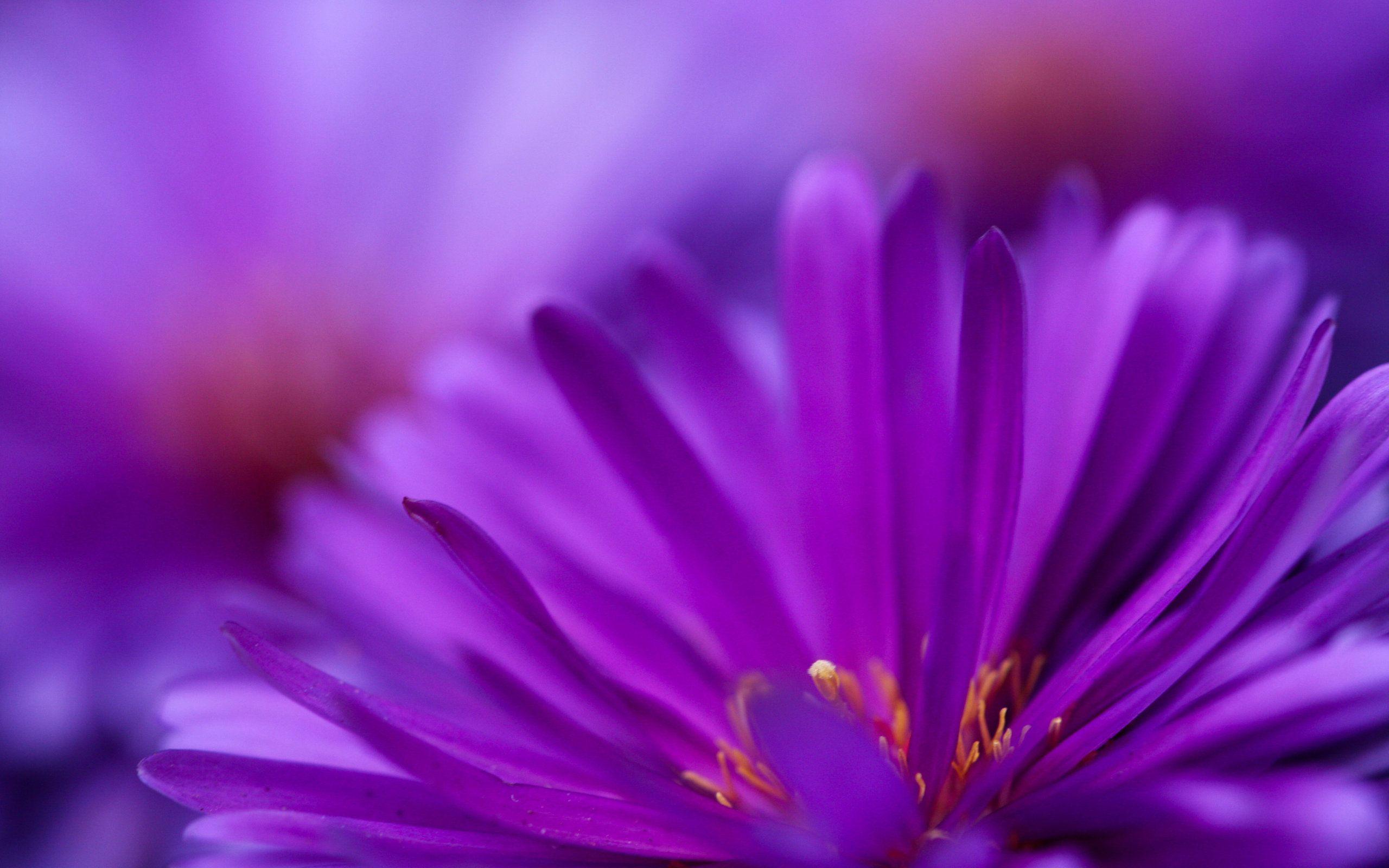 Purple Purple Flowers Wallpaper Purple Flowers Purple Wallpaper Hd Flower wallpaper zoom zoom backgrounds