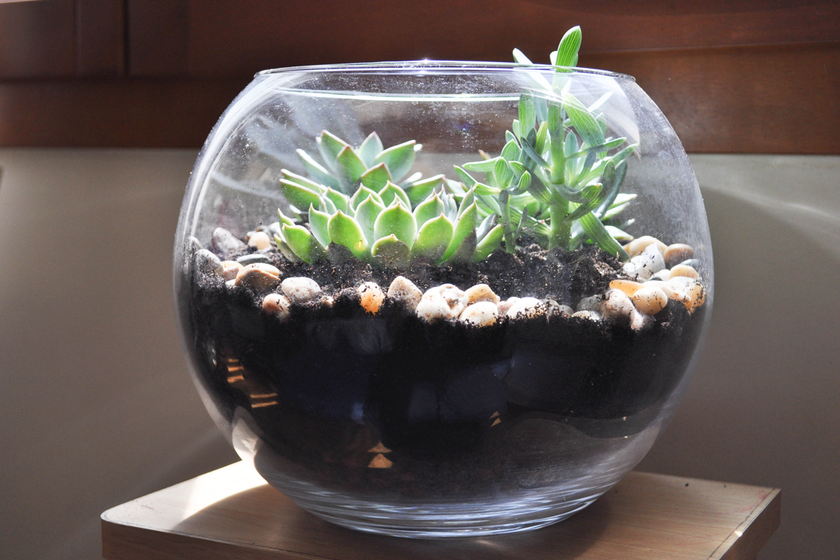 diy faire son terrarium de plantes terrarium plantes. Black Bedroom Furniture Sets. Home Design Ideas