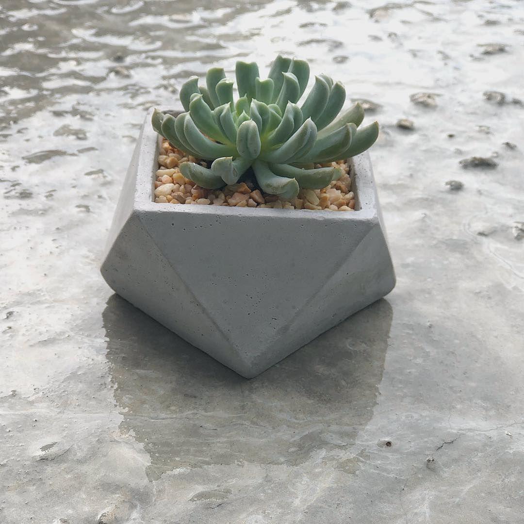 Concrete Planter Succulents Geometric Concrete Planter Cement Etsy Large Indoor Plants Succulents Indoor Concrete Planters