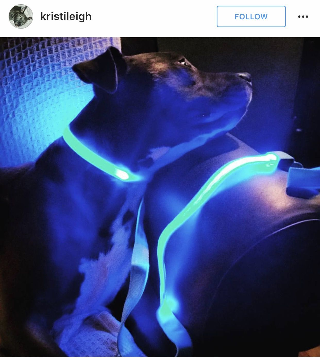 collar id itm led bone up pet light for dog safety clever tag pendant shape walking