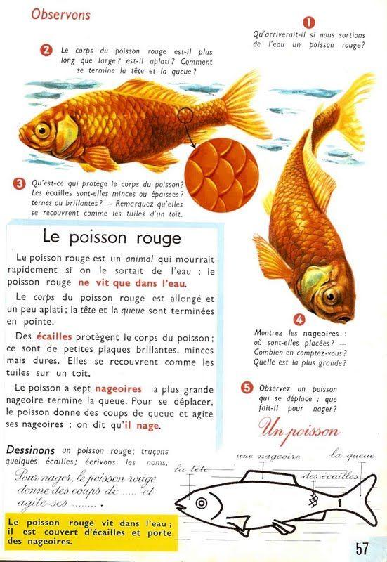 Le ons de choses le poisson rouge poisson le on - Le petit poisson rouge maternelle ...
